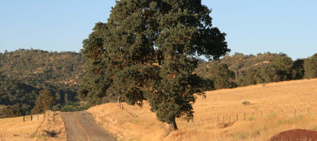 rankin-ranch-california-top-20-ranches-3
