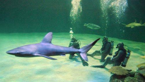 Diving-With-Sharks-Mandalay-Bay-Las-Vegas