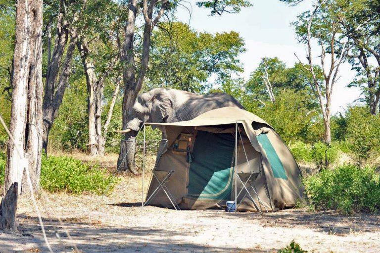 7-Unusual-Travel-Ideas-Ulinda-Safaris-Botswana-Elephant-Tent