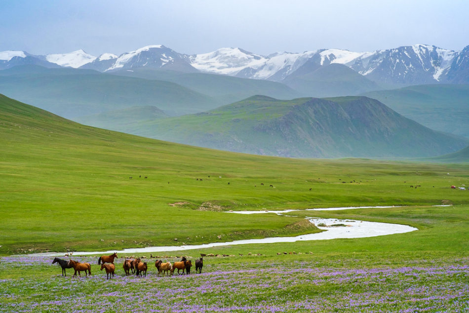 7-Unusual-Travel-Ideas-Visionary-Wild-Horses-Kyrgyz-Republic