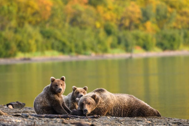 Bears-Salmon-Catcher-Lodge
