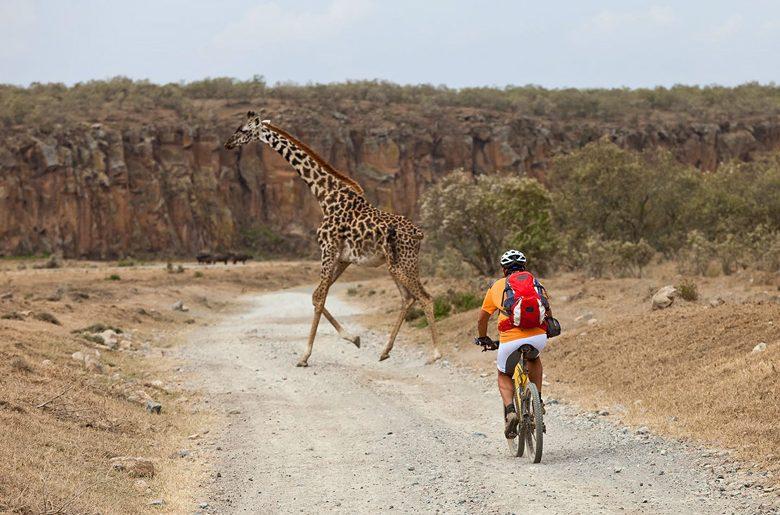 Biking-Safari-Giraffe