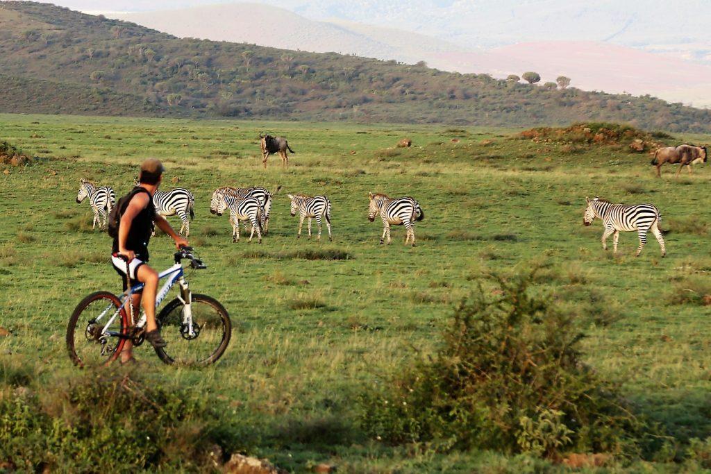 Biking-Safari-Zebras