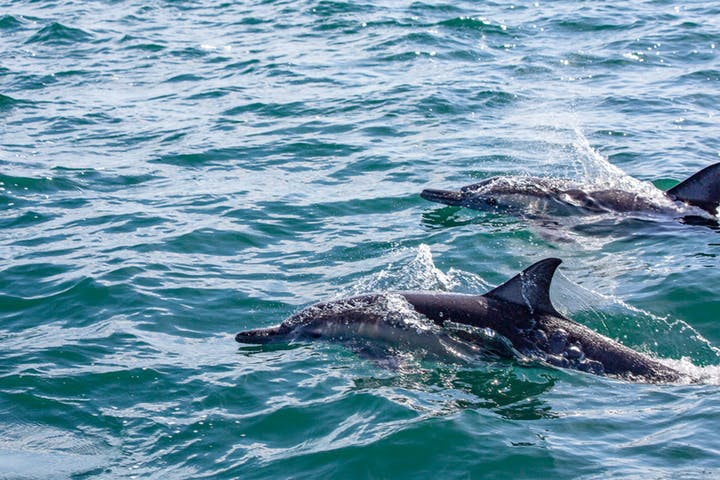 Dolphins-Loreto-Baja-Mexico